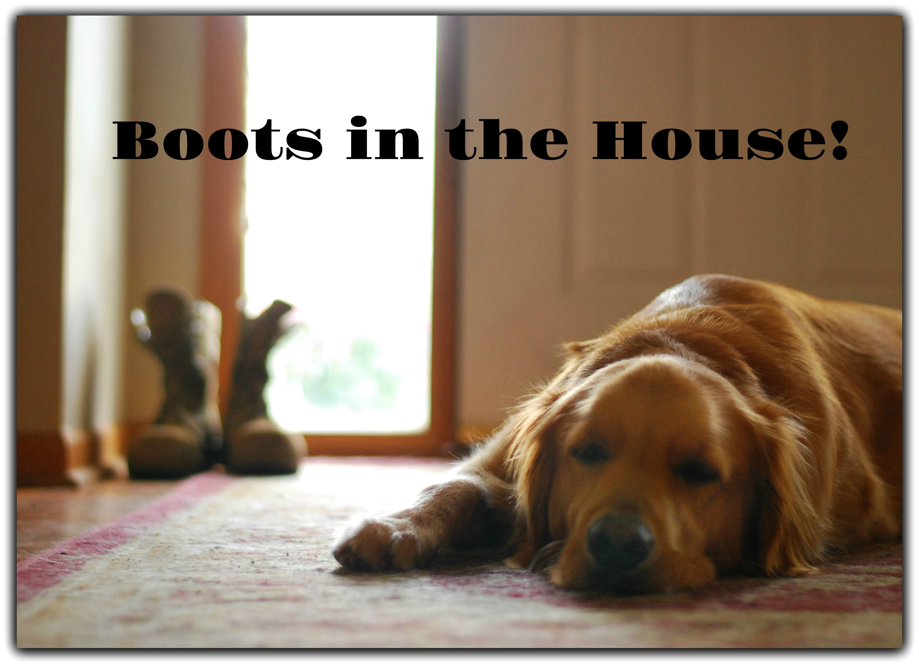 Boots in the House!