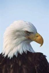 166_eagle head