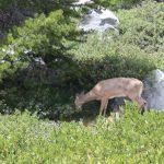 wildlife Teton