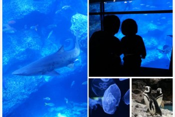 [東京親子景點]晴空塔墨田水族館~東京水族館推薦,超療癒的大水族箱