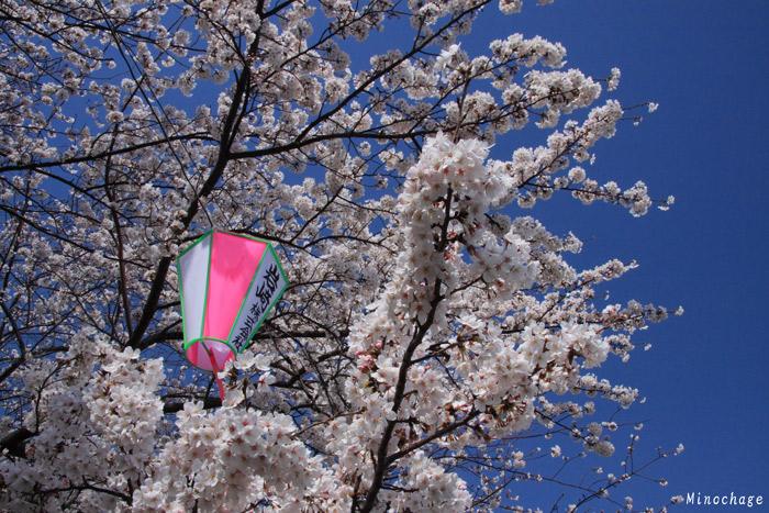 桜と青空(隅田川)
