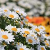 隅田川の花壇とシグマ単焦点レンズのCPLについて