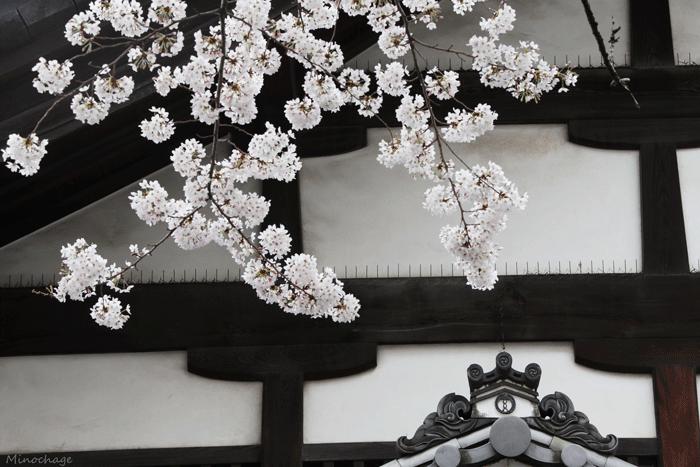 京都の春(1)