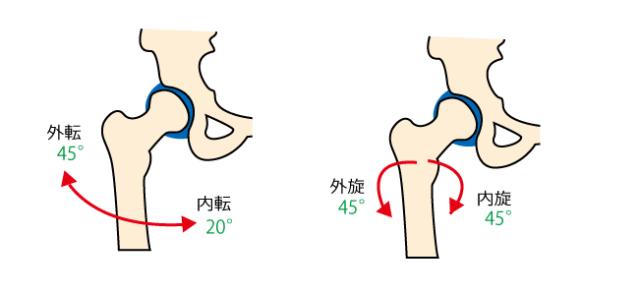 股関節の動き-1