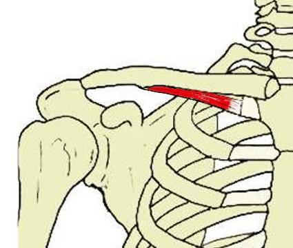 目立たないような小さな筋肉も身体の動きには影響します