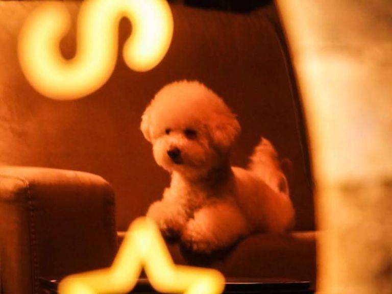 골드미러 후광간판 후광사인 골드스텐 간판 거울간판 아크릴현판제작 LED아크릴간판