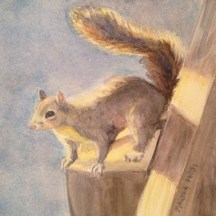 A Little Squirrely, watercolor