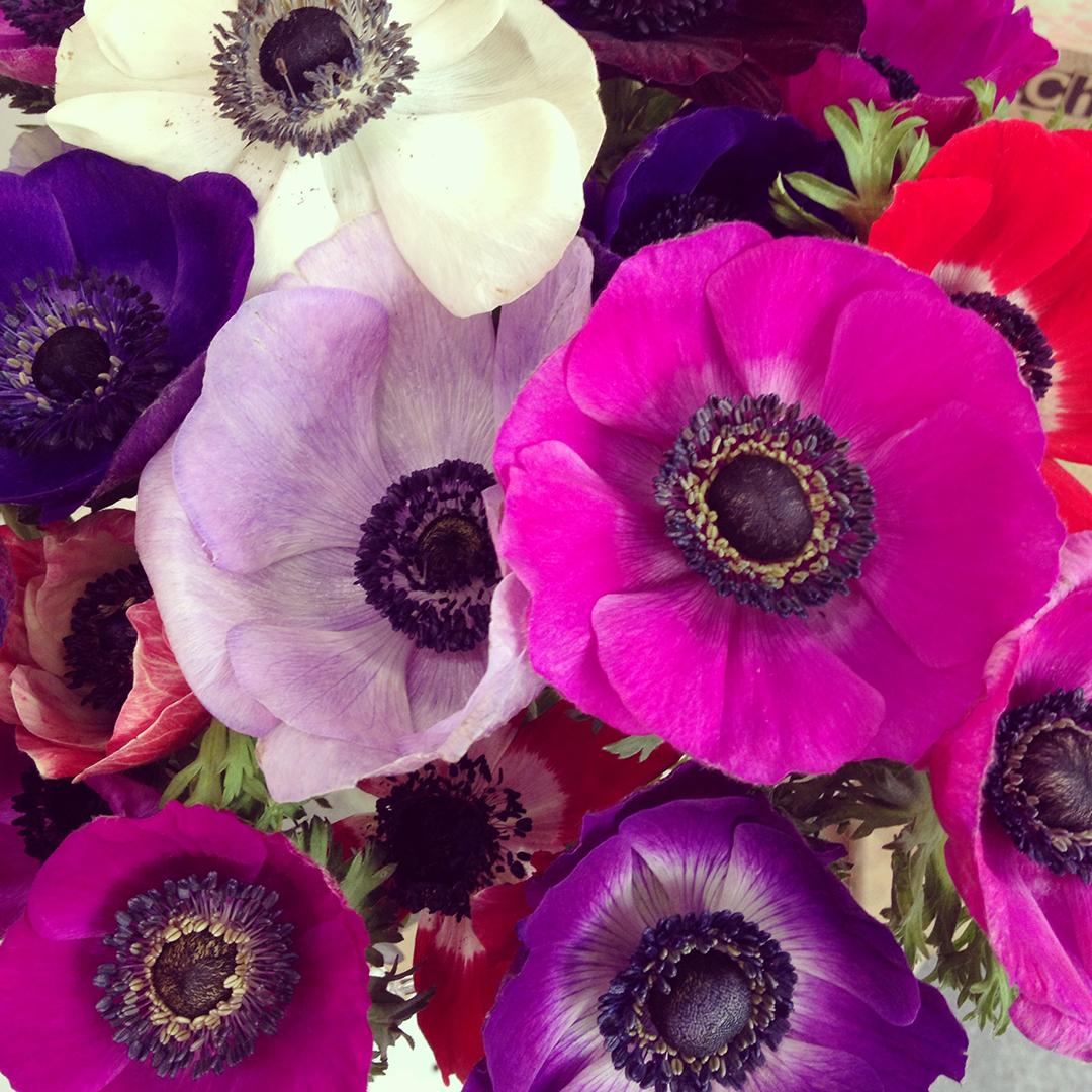 anemonen_mintlametta_wp