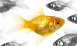 Expat Life: Sometimes you feel like a Fish Out of Water