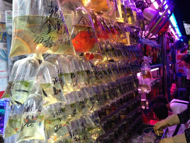 Hong Kong's Goldfish Markets