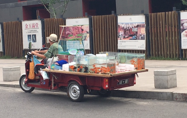 This...goldfish...in transit. #ThisisChina
