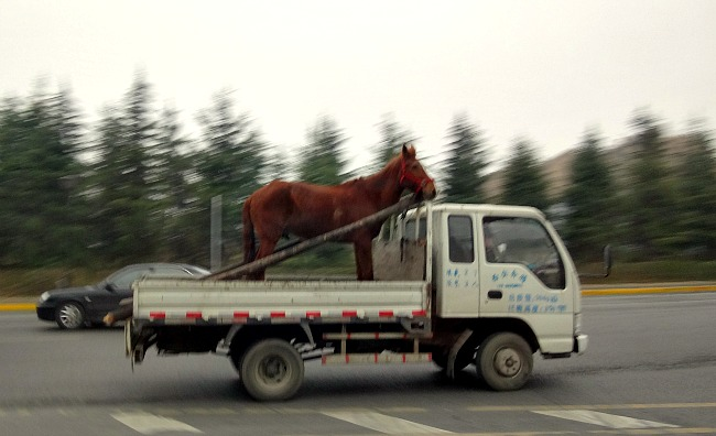 China: A small truck and a horse. #onlyinChina