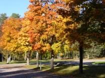 vackra träd
