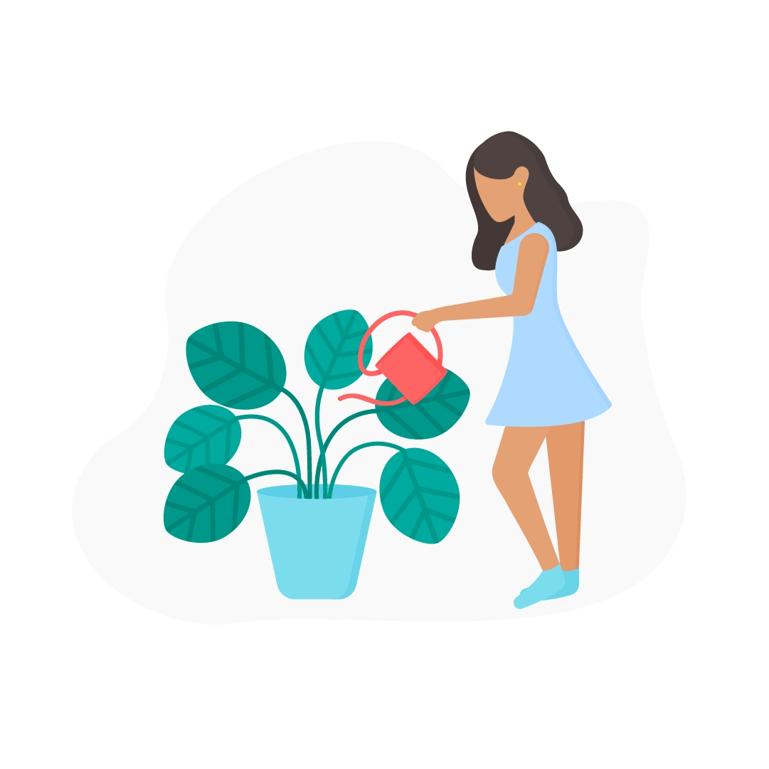 Vector illustration of a Woman watering Calathea Orbifolia plant in flat design style