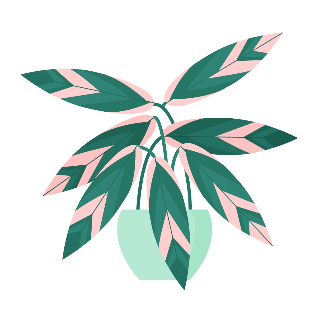 Vector illustration of a Stromanthe Triostar plant - for my sister's birthday in flat design style