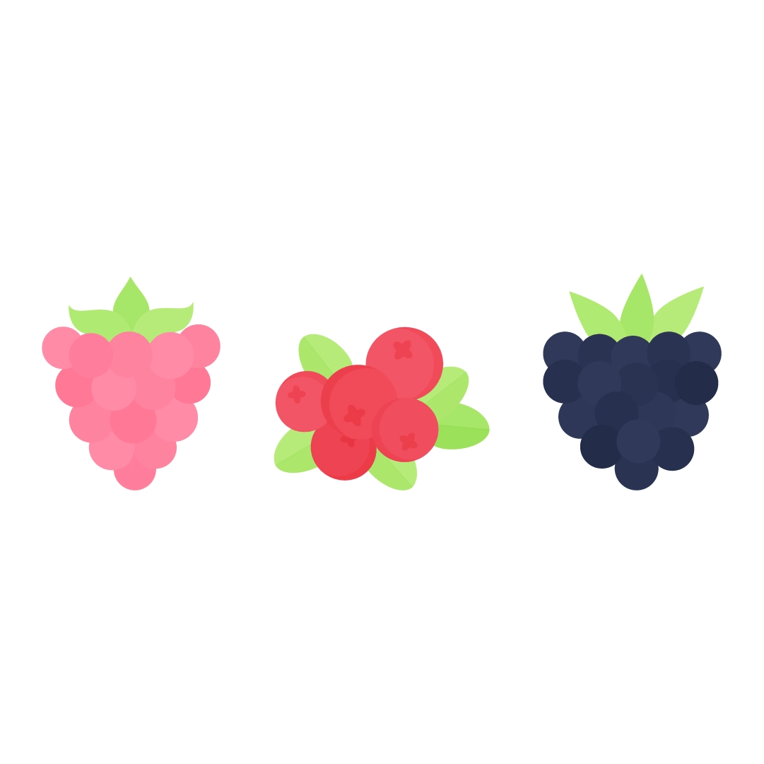 Vector illustration of berries: raspberry, cranberry & blackberry in flat design style