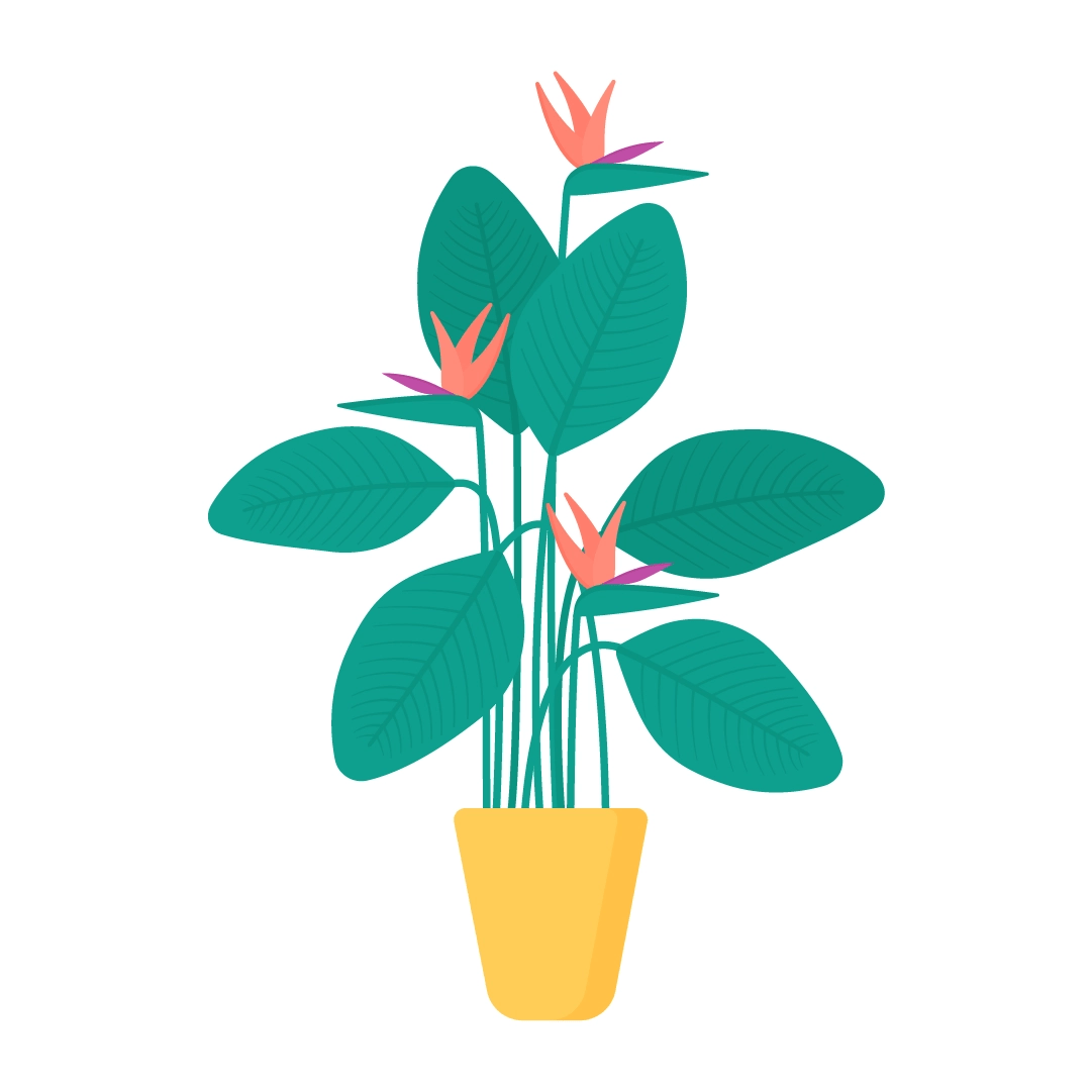 Vector illustration of Strelitzia Reginae - bird of paradise plant with flowers in flat design style