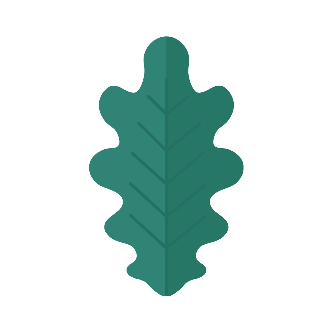 Vector illustration of an English Oak Leaf (Quercus Robur) in flat design style
