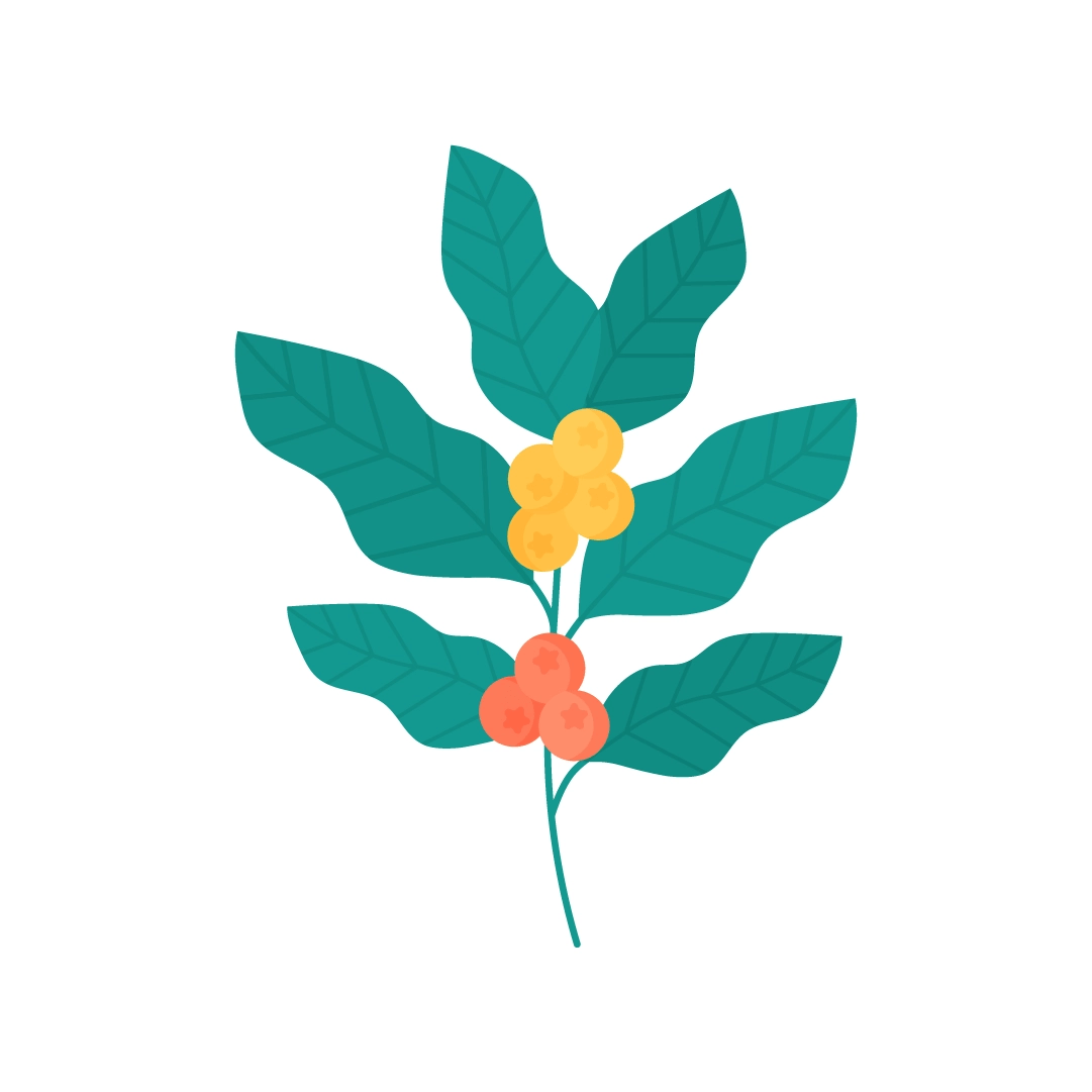Vector illustration of a coffee branch with fruits in flat design style