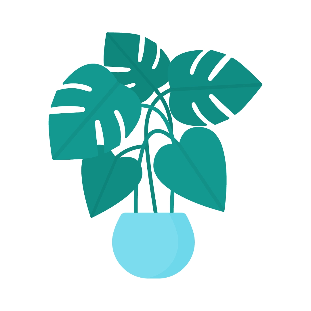 Vector illustration of a large Monstera Deliciosa plant in flat design style