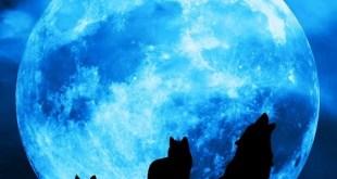 sinine taiskuu redtent
