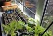 tomat aknalaual maaeluministeerium