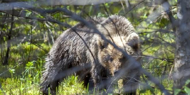 Karu Foto Aimar Rakko Keskkonnaamet