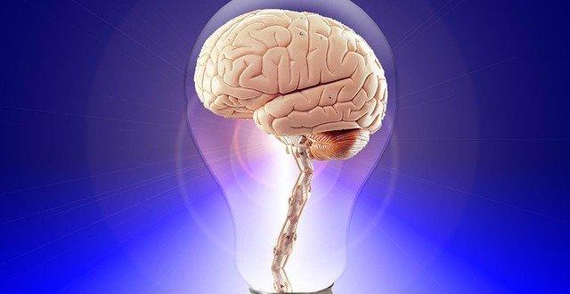 brain gb83ea36d8 640