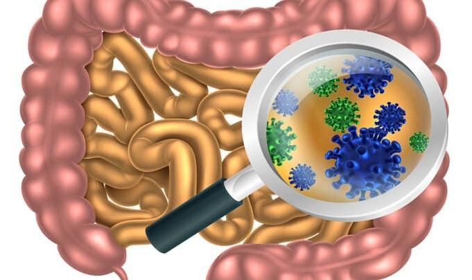 echilibrul florei intestinale
