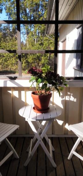 hortensia-kuistilla