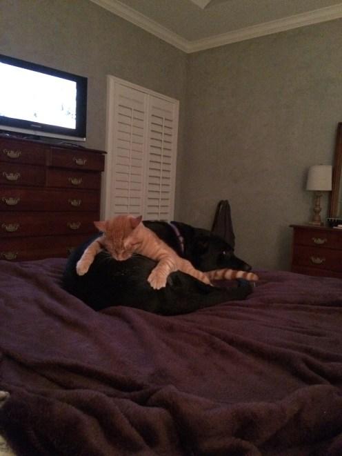 Cat on Dog 8.17.16