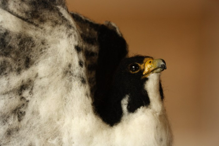 falcon felted sculpture
