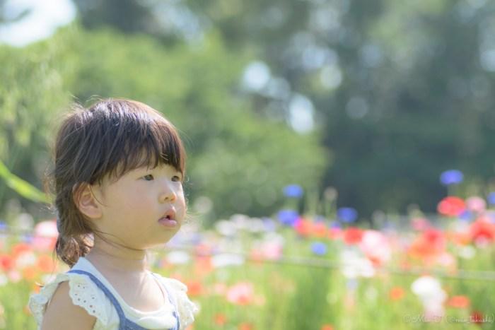 花畑前に佇むShico(Nikon D5500)