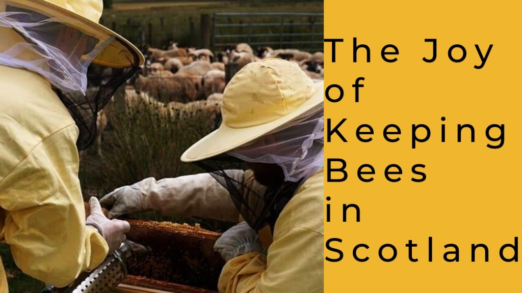 The joy of keeping bees in Scotland