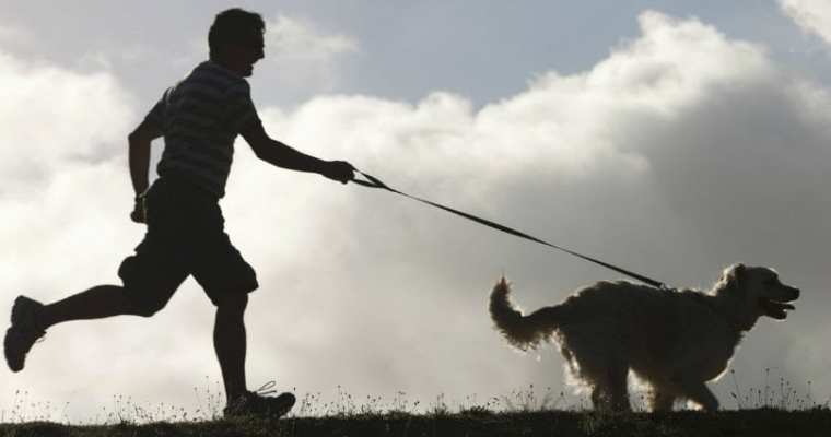 Top Dos and Don'ts When Running With Your Dog