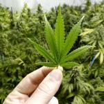 Different Ways Marijuana Is Consumed