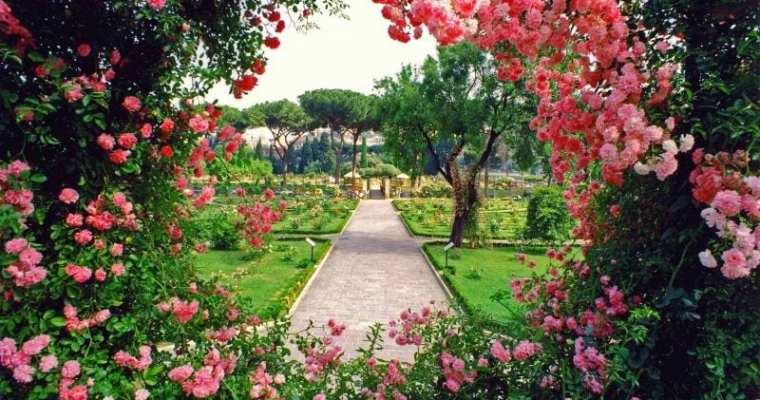 The Health Benefits of Having A Garden