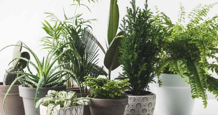 How plants can help to improve indoor air quality