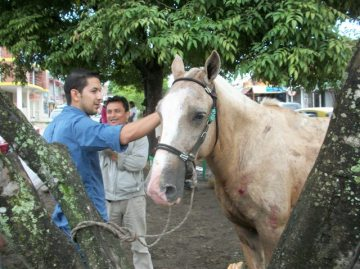 MVZ Carlos Gómez - Veterinaria Clinican