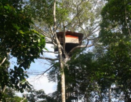 140114 casa_arbol_putumayo