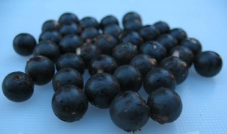 fruto Asaí