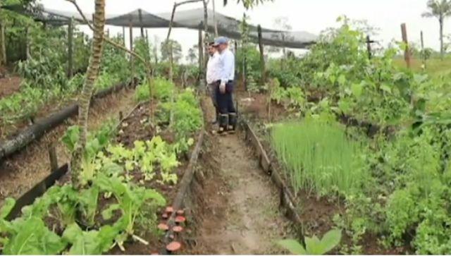 Huertas Familiares en Putumayo – Colombia crece con Ecopetrol