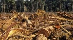 Especies de fauna y flora en peligro en la sur de la amazonía por culpa de la deforestación para ganadería expansiva.