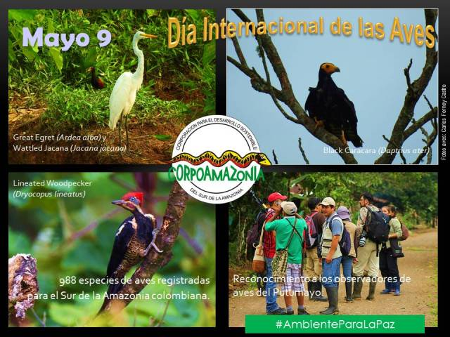 dia_internacional_aves_mayo_9