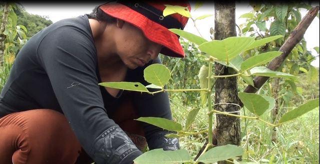 Cultivo pimienta (4)