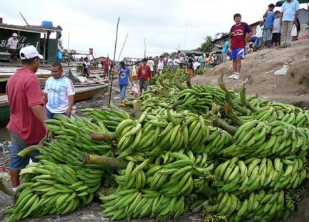 Tres centros de acopio impulsa la gobernadora de Putumayo para entrar a competir al mercado nacional.