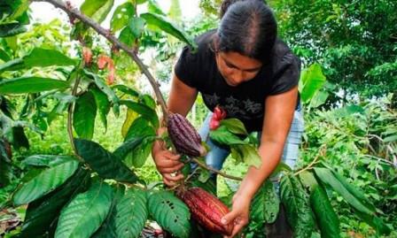 Gobierno aprueba proyectos para pequeños productores que beneficiarán a más de 10.000 familias
