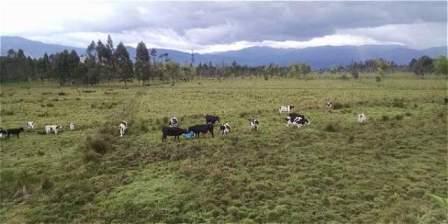 El 83,8 por ciento del área se usa para la ganadería, cuando solo el 28,9 por ciento es apta para tal vocación.