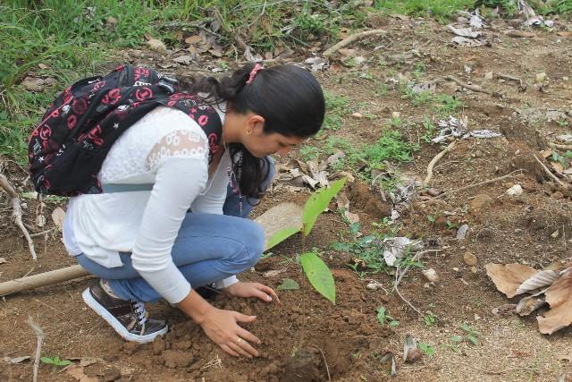 Corpoamazonia y familias en su tierra reforestan