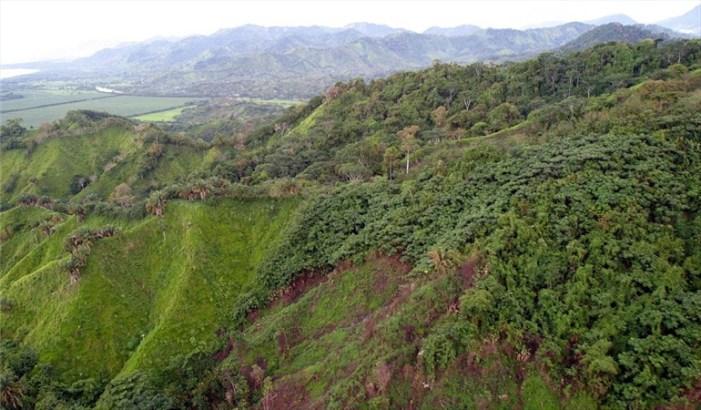 Adoptan medidas para frenar deforestación en cuatro departamentos